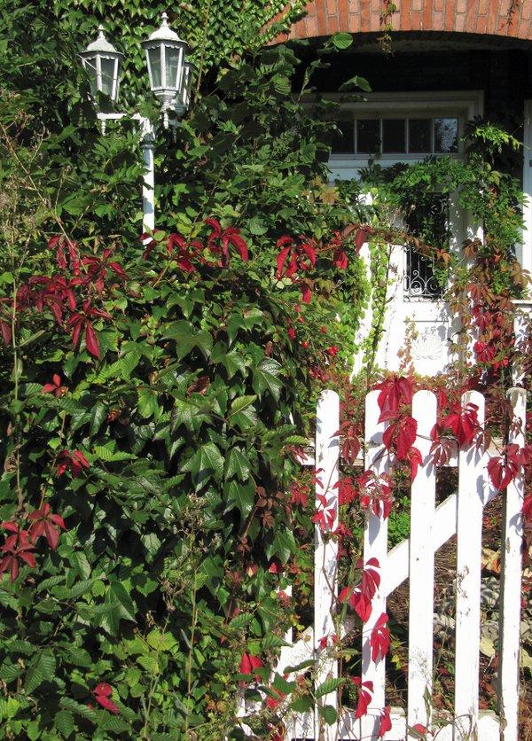 Zugewachsene Tür hinter Zaun