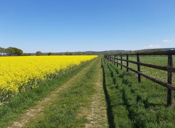 Frühling in Norddeutschland