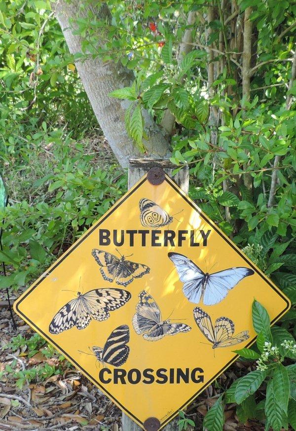 Vorsicht, Schmetterlinge!