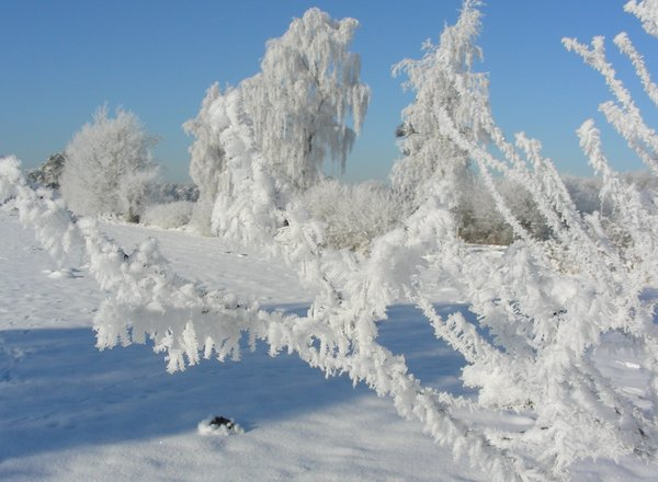Frostzauber in der Dingdener Heide