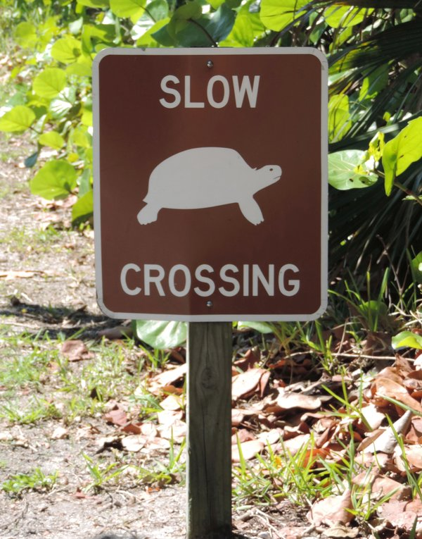 Vorsicht, Schildkröte!