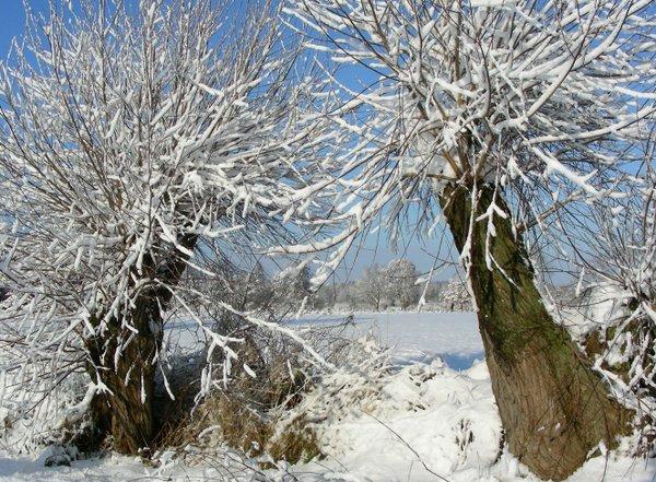 Winterliche Weiden