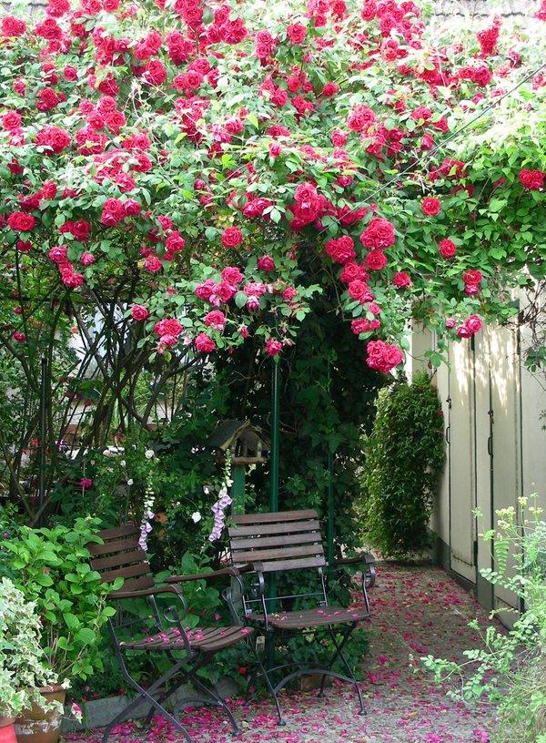Unter dem Rosenstrauch
