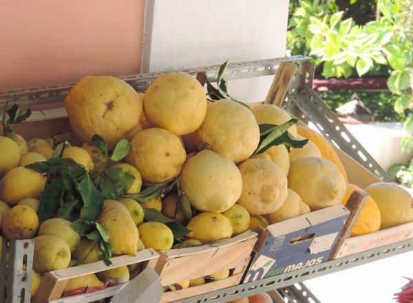 Zitronen der Amalfiküste