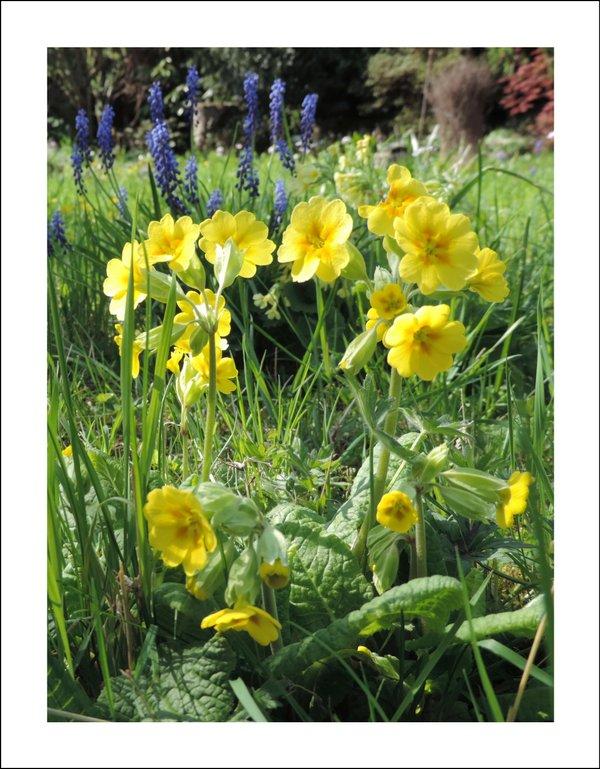 Frühlingsgrüße - Klappkarte mit Umschlag