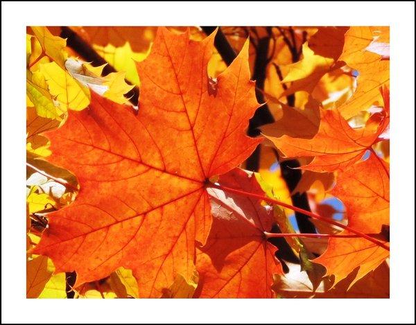 Herbstfarben - Classic Edition